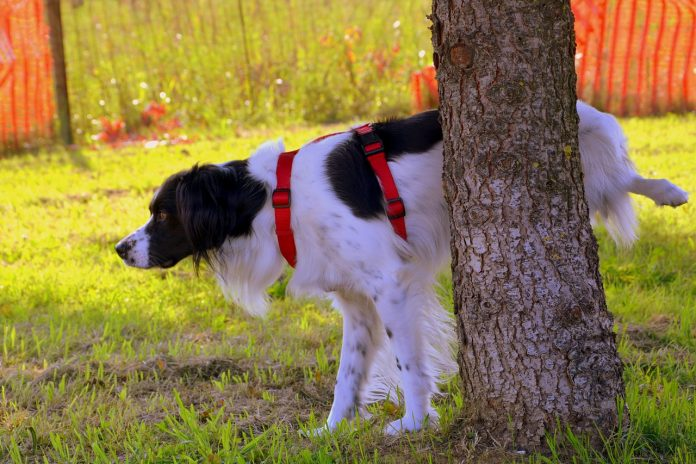 ensinar cachorro - capa